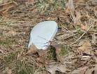 A shoe along a forest path.